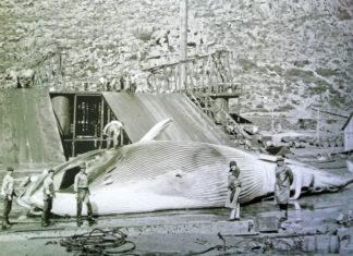 Factoría de Caneliñas, nos anos 20 do século XX. Arquivo de Álex Aguilar.