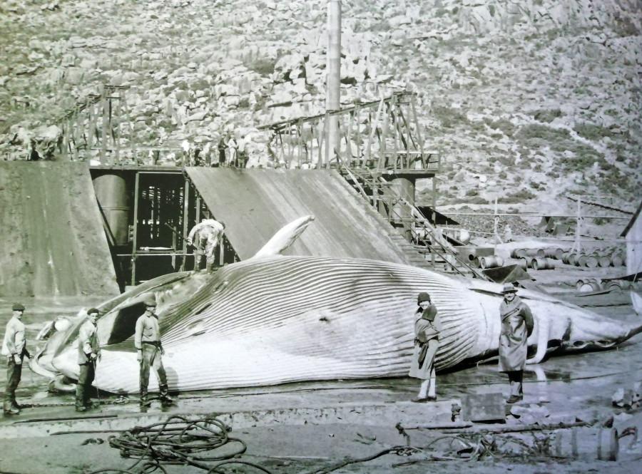 Factoría de Caneliñas, en los años 20 del siglo XX. Archivo de Álex Aguilar.
