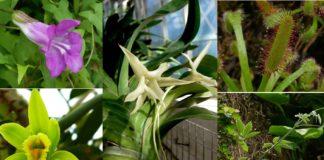 Durante as súas expedicións, Darwin estudou con gran atención e detalle a diversidade e adaptacións das plantas. Imaxes: Jaime Güemes.