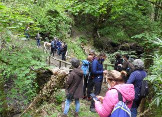 Imaxes da presentación da ruta do mel e o oso no Courel. Foto: Fundación Oso Pardo.