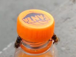 As abellas abren o refresco.