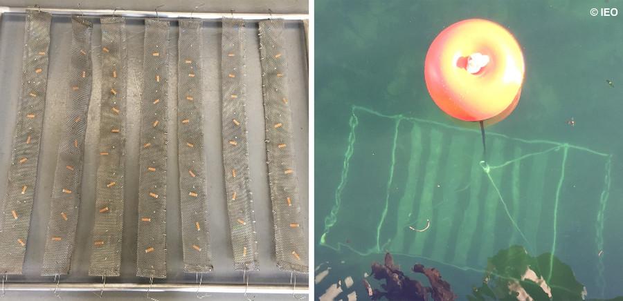 Imaxes do traballo de recollida de cabichas que desenvolveron os investigadores do Oceanográfico de Vigo. Foto: IEO.