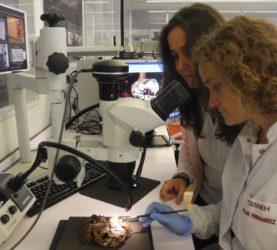 María Martinón e Pilar Fernández, analizando os restos de Mtoto. Foto: Cenieh.