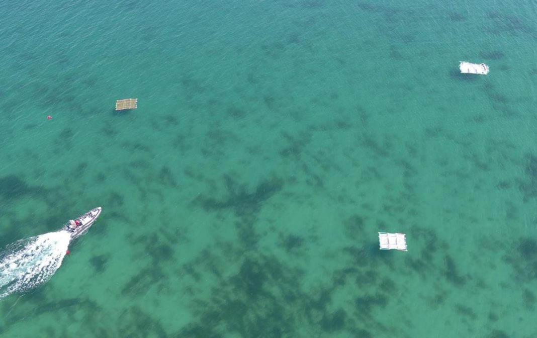 Balsas plásticas flotantes colocadas en Toralla, coincidindo co paso do satélite Sentinel 2, para probar algoritmos de detección de plástico. Foto: Duvi.