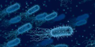 Os científicos provocaron un cambio na E. coli que impide aos virus acceder á información precisa para replicarse. Foto: Pixabay.