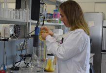 Xanel Vecino, líder do novo proxecto, traballando no laboratorio. Foto: Duvi.Xanel Vecino, líder do novo proxecto, traballando no laboratorio. Foto: Duvi.