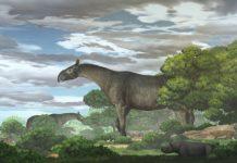 Ilustración do rinoceronte xigante xunto a outra fauna coetánea na zona da bacía de Linxia (China). Autor: Chen Yu.