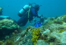 Viviana Peña, durante o traballo de campo do estudo sobre a acidificación nunha zona coralina de Xapón.