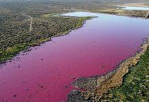 Vista aérea da lagoa de Corfo, na Patagonia, tinguida de rosa polos residuos acuícolas. Foto: Daniel Feldman.