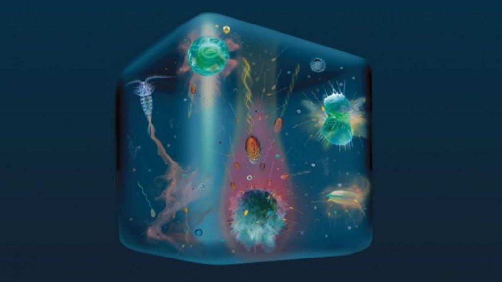 Ilustración que representa os microorganismos que habitan nunha pinga de auga. Imaxe de Glynn Gorick, Justin Seymour e Roman Stocker; Stocker lab