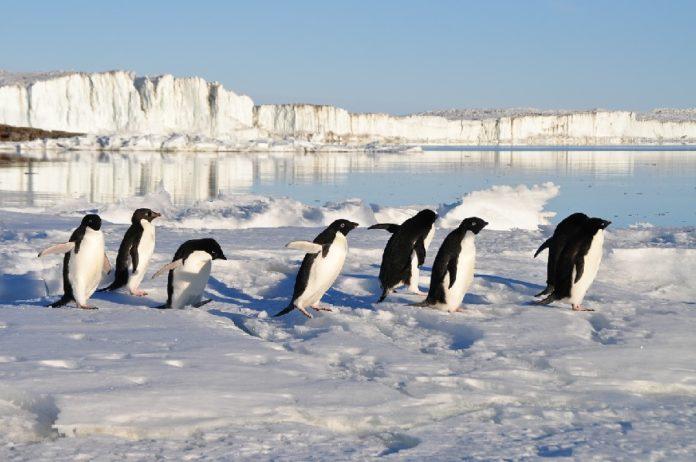 O estudo analizou as feces de tres especies de pingüíns. Foto: Pixabay.