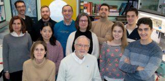 O equipo de Luis Enjuanes e Isabel Sola (sentados) e Sonia Zúñiga ( no centro da imaxe) está a desenvolver unha fórmula esterilizante fronte ao SARS-CoV-2. Foto: CSIC.
