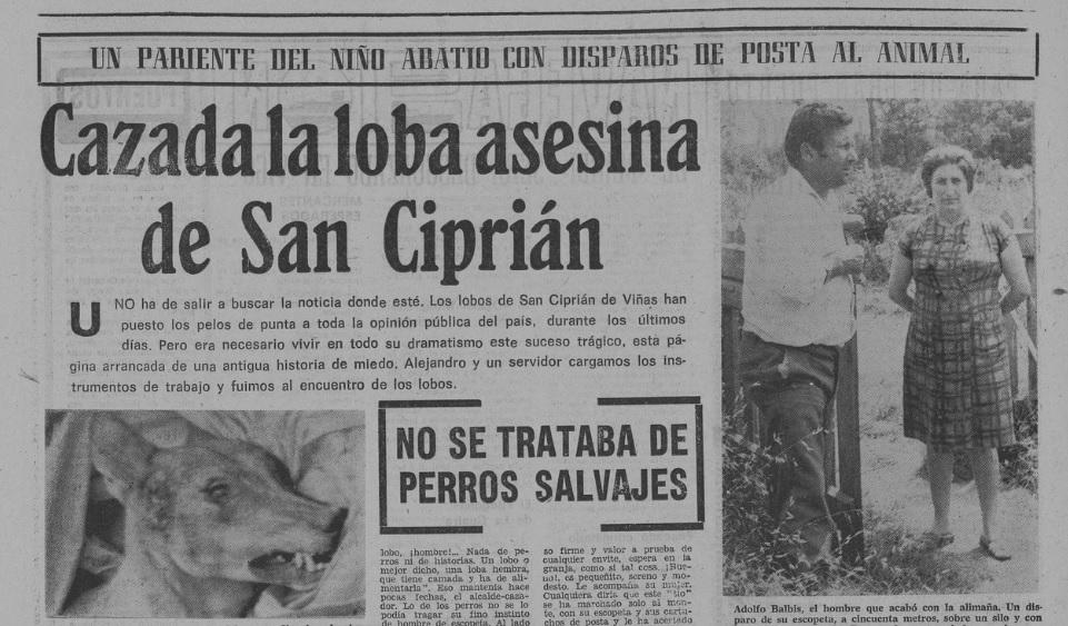 """O 14 de xullo de 1974, """"El Pueblo Gallego"""" informaba da captura e morte dunha loba en San Cibrao, á que se lle atribuíu a morte dos nenos."""