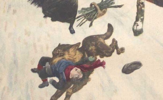 Recreación do ataque dun lobo a un neno no norte de España, nunha ilustración dun artigo publicado en 1914 en
