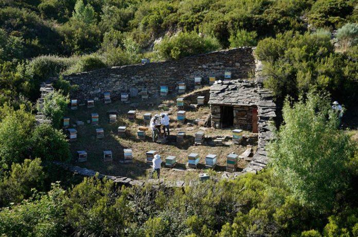 Apiario de Viana do Bolo (Ourense) no que se desenvolveu parte do traballo de campo sobre tratamentos alternativos para a varroa. Foto: VARROAFORM.