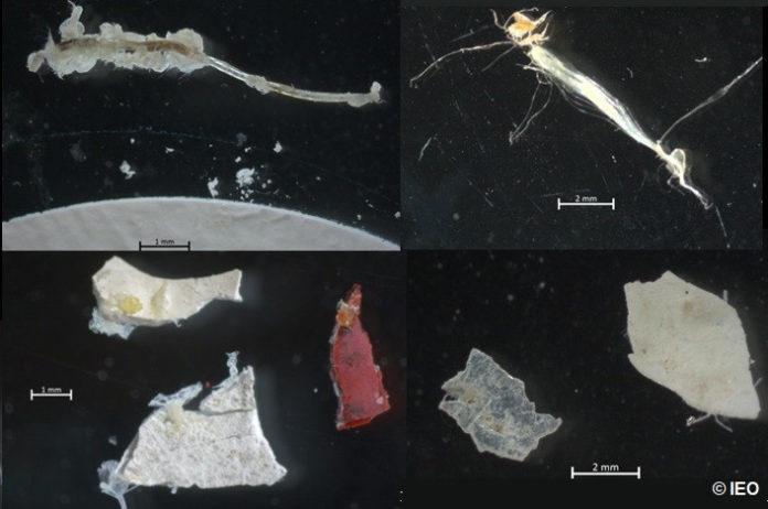 Detalle de microplásticos atopados no estudo. Foto: IEO.