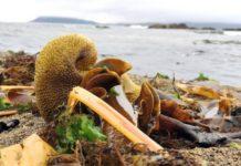 Algas mariñas nunha zona costeira. Foto: Santi Alvite