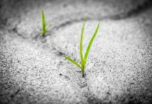 As plantas non poden desprazarse na procura de alimento, pero desenvolven todo tipo de estratexias para obtelos na súa contorna máis próxima. Foto: Pixabay.