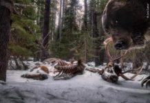 """A foto gañadora na categoría """"Animals in ther Environment"""". Foto: Zack Clothier"""